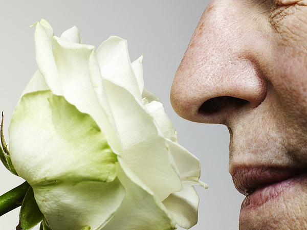 Senior man smelling rose, close-up Photograph by Flashpop
