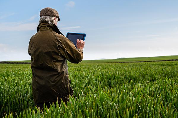 Senior man using a digital tablet in a field Photograph by JohnFScott