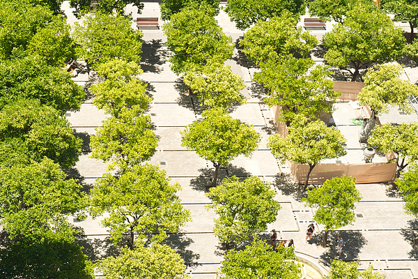 Seville Cathedral Gardens From The Cathedral Tower. Photograph by Alphotographic