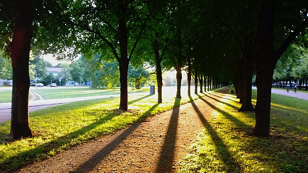 Shadow Of Trees Falling On Footpath In Park Photograph by Stephan Kaps / EyeEm