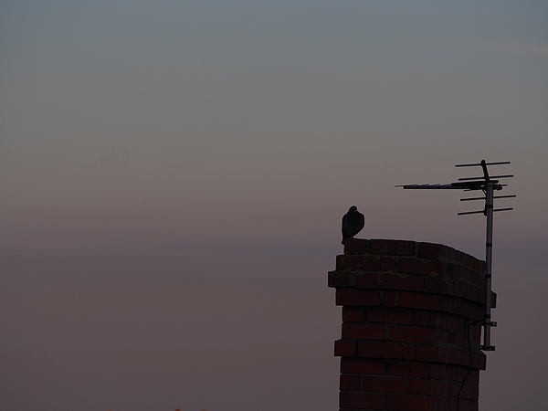 Silhouette Bird Perching On Built Structure Against Sky At Sunset Photograph by Andrew Jones / EyeEm