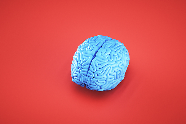 Simple image of brain Photograph by Gremlin