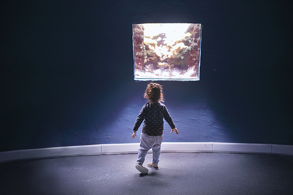Small Girl Looking At Aquarium Photograph by Stanislaw Pytel
