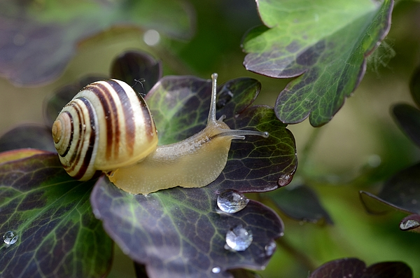 Snail Photograph by Avatarmin