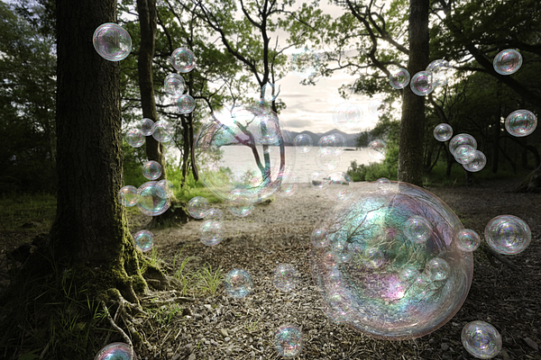 Soap Bubbles In A Forest Photograph by Theasis