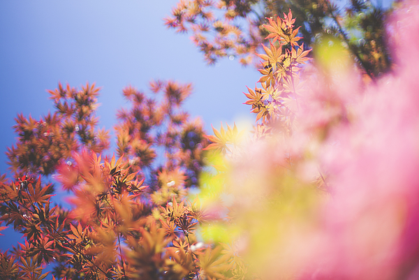 Spring time Photograph by Capelle.r