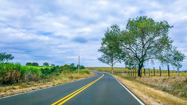 Sugarcane plantations are crossed by roads and highways in the rural area of Piracicaba. Photograph by CRMacedonio