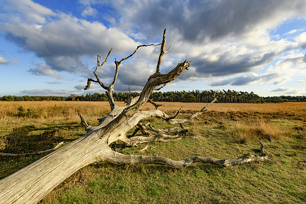 Sunny Landscape In The Deelerwoud Nature Reserve During A Beautiful Fall Day Photograph by Sjo