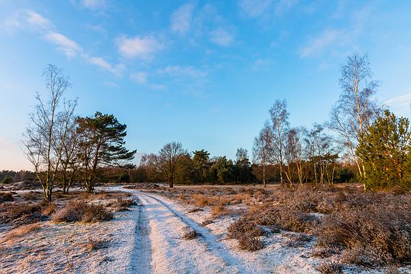 Sunny Winter Path Photograph by William Mevissen