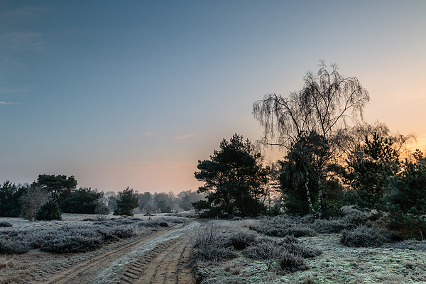 Sunrise Winter Path Photograph by William Mevissen
