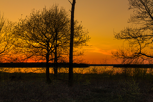 Sunset Silhouette Trees Photograph by William Mevissen
