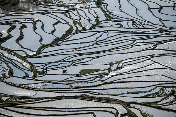 The Beautiful Line Of The Terraced Fields Photograph by Zhouyousifang