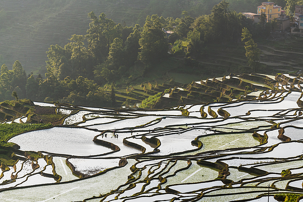 The Farmer Planted Rice Seedlings In The Terraced Fields Photograph by Zhouyousifang