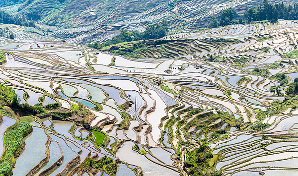 The Landscape Of Terraced Fields Photograph by Zhouyousifang