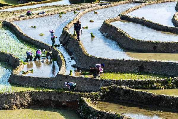 The Terraced Fields Of Spring And The People Working In The Terraced Fields Photograph by Zhouyousifang