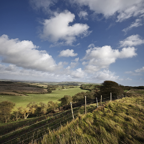 This green & pleasant land. South Wight Landscape Photograph by s0ulsurfing - Jason Swain