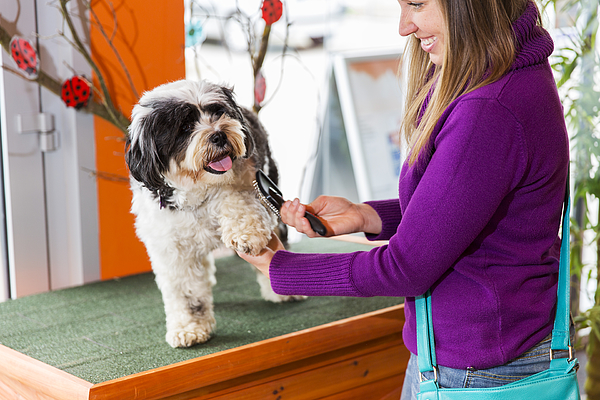 Tibetan Terrier in pet store...cute woman owner is brushing him Photograph by Choja