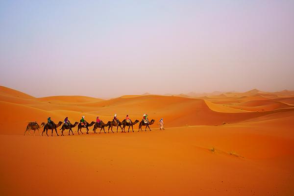 Tourist camel safari in Sahara desert Photograph by Redtea