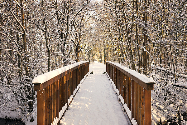 Towards The Winter Wonderland Photograph by Bernd Schunack
