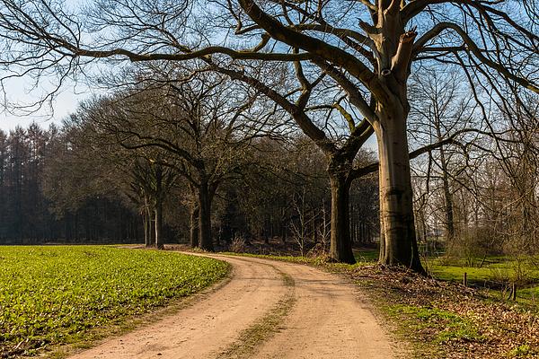 Tree Path Photograph by William Mevissen