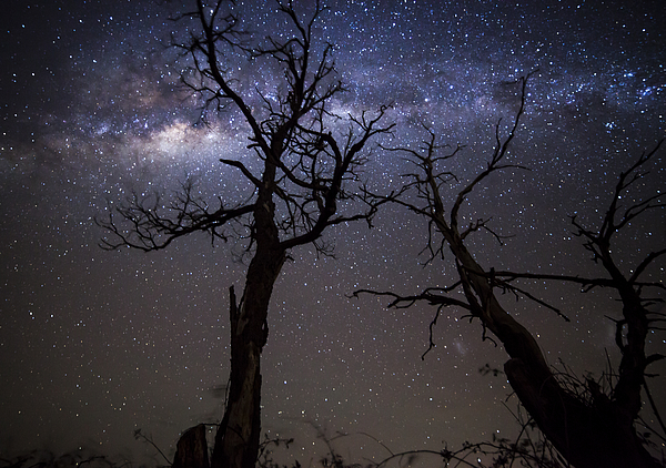 Trees and stars Photograph by Jordanwhipps1987