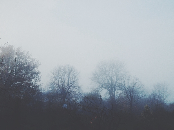Trees In Foggy Weather Photograph by Amy Mauger / EyeEm