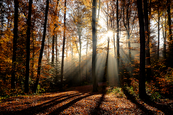 Trees In Forest During Autumn Photograph by Matthias Gaberthüel / EyeEm