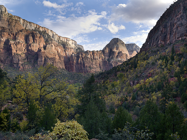 Trees in Zion National Park Photograph by Fotosearch