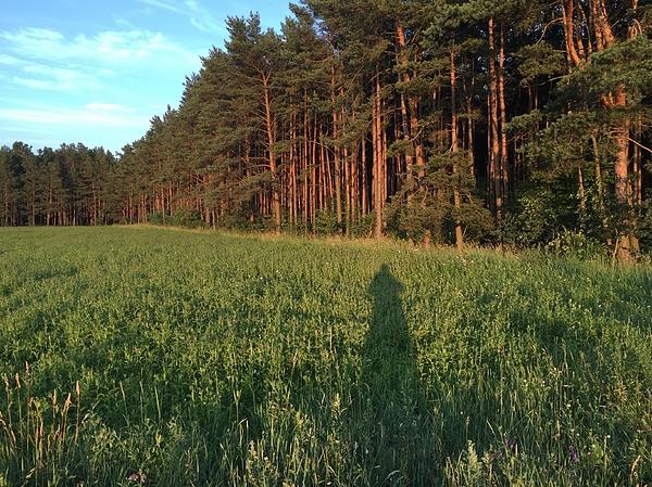Trees On Grassy Field Photograph by Paulien Tabak / EyeEm