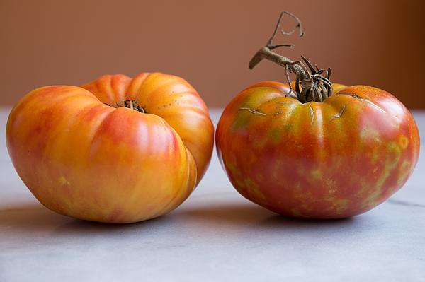 True organic tomatoes Beef Heart Photograph by Jean-Marc PAYET