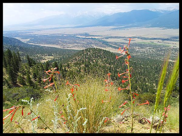 Valley Seen Through Wildflowers Photograph by Frank Schiefelbein / EyeEm