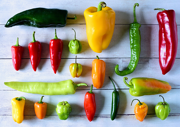 Variety of fresh peppers Photograph by Photo by Cathy Scola