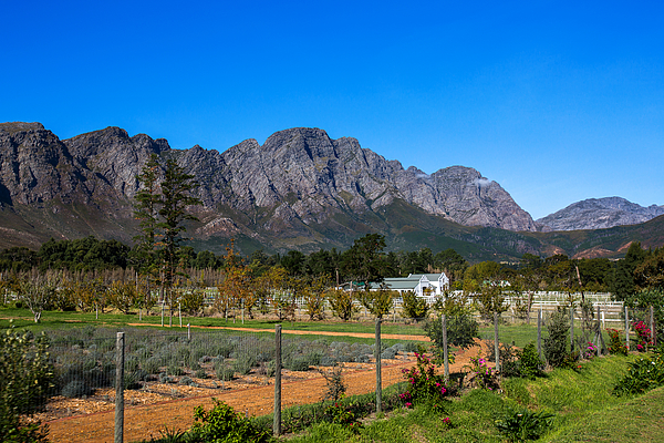 View of Mountains, Farm and Vineyard in Franschoek, Western Cape, South Africa Photograph by Artie Photography (Artie Ng)
