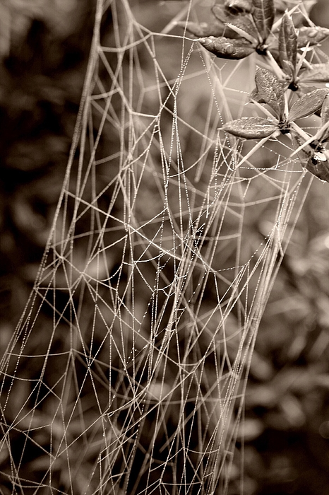 View Of Spiderweb In Forest Photograph by Savannah Moorghen-Young / EyeEm