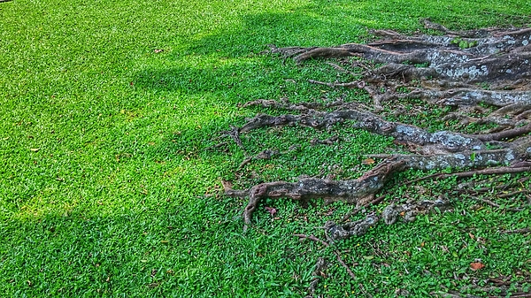 View Of Tree Roots Photograph by Afrijal Dahrin / EyeEm