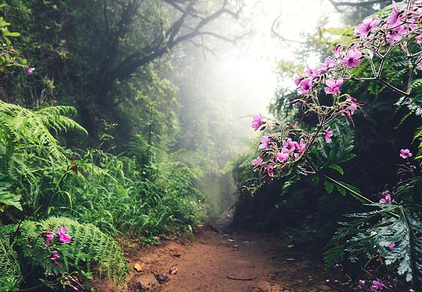 Walking Path On Madeira Island Photograph by Borchee