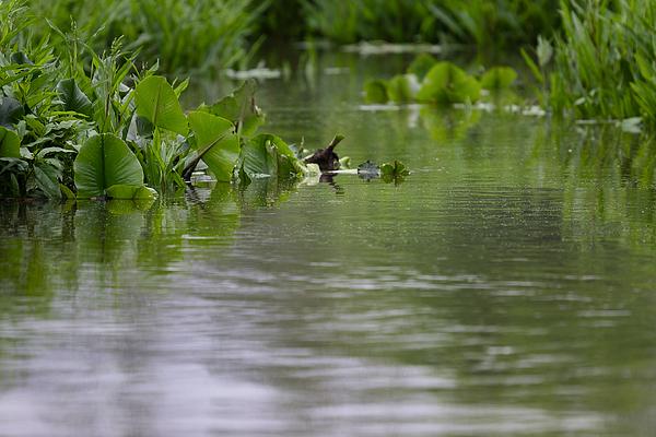 Water Plants Photograph by Ricky Kresslein