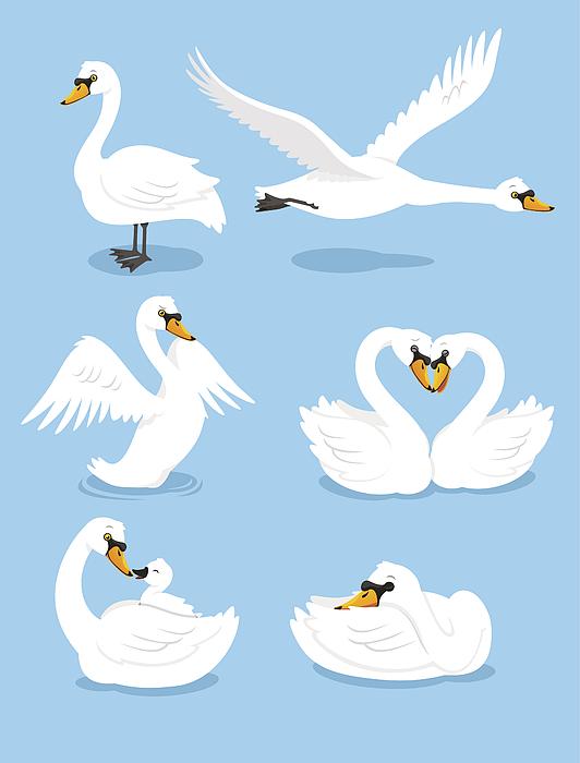 White Swan Wing Water Animal Bird Elegance Grace Set Drawing by Tomacco