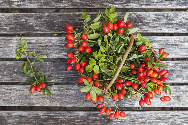 Wickerbasket of rosehips on wood Photograph by Westend61