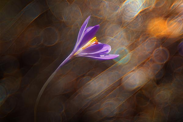 Winds flower Photograph by Edoardogobattoni.net