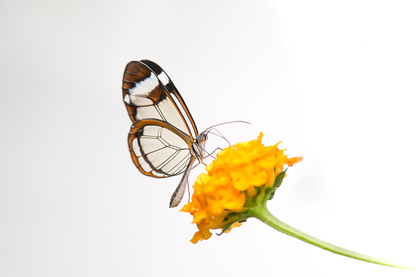 Wings of glass Photograph by José Gieskes Fotografie