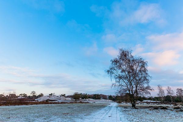 Winter Birch Photograph by William Mevissen