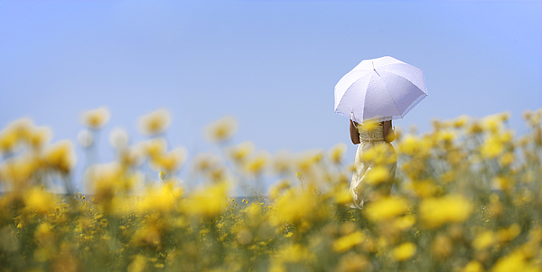 Woman holding umbrella in field of yellow flowers Photograph by Peter Cade