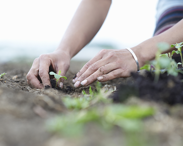 Woman planting seedlings. Photograph by Dougal Waters