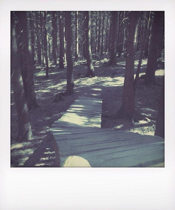 Wooden Footpath In Forest Photograph by Frank Swertz / EyeEm