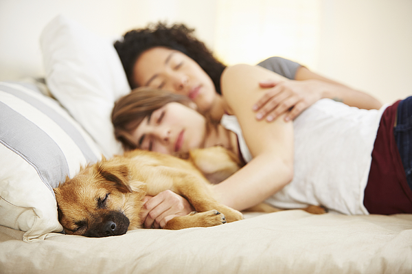 Young Female Couple And Pet Dog Sleeping On Bed Photograph by Tony Garcia