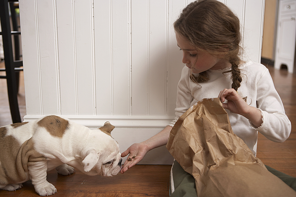 Young Girl (8-10) Feeding Dog Photograph by Chris Amaral