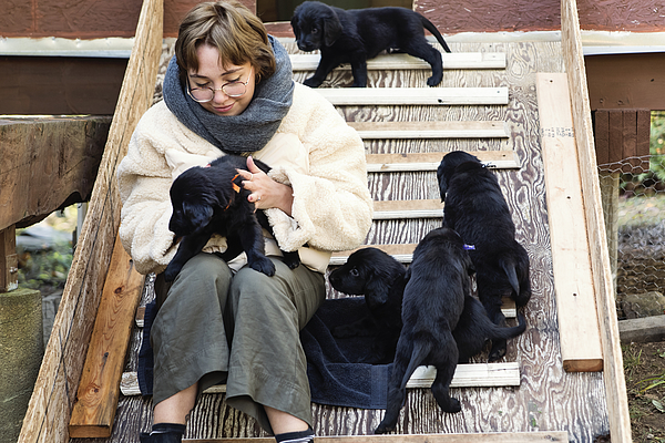 Young woman with purebred flat-coated retriever puppy litter. Photograph by Martinedoucet