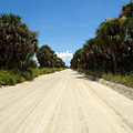 Back Road In Central Florida. by Allan  Hughes