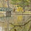 Bridge Revealed by Robert Joseph
